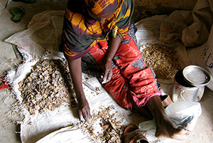 Women-cleaning-frankincense---Guelleh-Osman-Guelleh---Beyomol-Gums---Neo-Group-Somaliland3